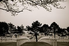 American Graveyard at Normandy. France - where we lost  many military in defending France. - I think they've forgotten our investment in their country!