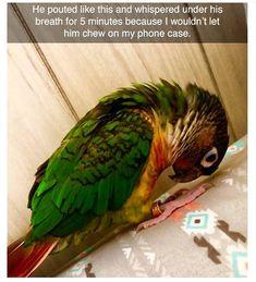 Animal Memes to Make You Laugh on Bad Days - 4