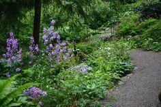 Illakko kukkii polun varrella Planting, Gardening, Shade Garden, Beautiful Gardens, Different Colors, Garden Ideas, Fragrance, Around The Worlds, Mary