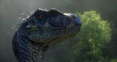 (not T Rex but still cool) Jurassic Park 3 Male Velociraptor - Jurassic Park 4 Gallery