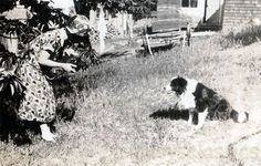 Woman taking photo of a border collie, 1920s.
