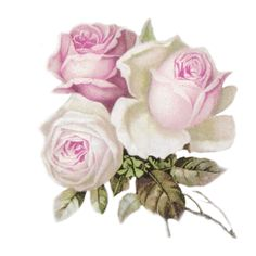 Hergestellt von Stella Luo Tätowierern in Toronto, Kanada - rose tattoos Oil Painting Flowers, Fabric Painting, Watercolor Flowers, Flower Backgrounds, Flower Wallpaper, Vintage Rosen, Rosen Tattoos, Flower Ornaments, Postcard Art