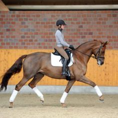 Get Your Dressage Horse to Stretch Down into Contact | Dressage Today