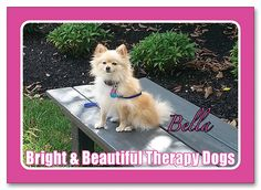 Bella girly dog :º) http://www.customsportscards.com/select.cfm/Custom-Trading-Cards/Pets/