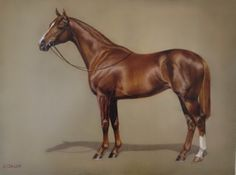 Jaime Corum - New Editions Gallery, Lexington, KY Horse Drawings, Animal Drawings, Race Horse Breeds, Horse Story, Colored Pencil Artwork, Horse Anatomy, Horse Posters, Equestrian Decor, Horse Silhouette