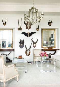 lots of antlers