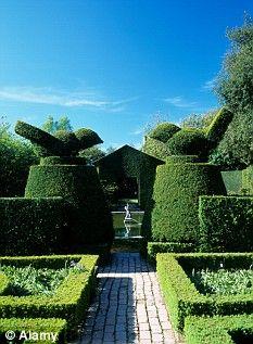 Beautifully maintained yew topiary at Hidcote Manor gardens (dailymail.co.uk)