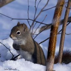 haha my mom LOVES squirrels and this is just too cute!