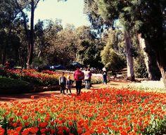 Araluen Botanic Park, Roleystone - Buggybuddys guide to Perth Kids Picnic, Picnic Spot, Holidays With Kids, School Holidays, Botanic Park, Tulip Festival, Family Day, Train Rides, Free Blog