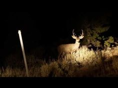 Utah Division of Wildlife Puts Poachers in the Headlights - Wide Open Spaces