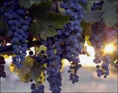 #MEXICO. Valle de Guadalupe, cuna de los mejores vinos de Baja California