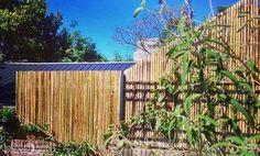 Corte exacto como querías: en diagonal solo en @BambuGuazu #bambu #invierno #diagonal #cerco #jardin #construccion