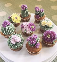 Kaktus Cupcakes, Succulent Cupcakes, Garden Cupcakes, Cactus Cake, Wedding Cake Prices, Pear Cake, Zucchini Cake, Salty Cake, Cake Decorating Tips