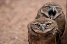 heavy metal owls