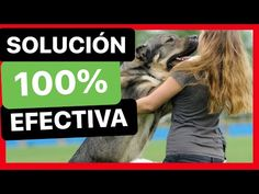 - YouTube Youtube, Dogs, Animals, Remedies, Lets Go, Pets, Animales, Animaux, Pet Dogs