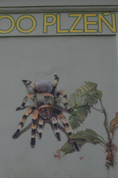 Pictures on the wall of a zoo store in Pilsen