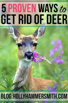Get Rid of Deer: Deer can cause severe damage to vegetable gardens, trees and ornamental shrubs. Get rid of deer for good by implementing these proven tactics. Deer Resistant Garden, Deer Repellant, Organic Insecticide, Vegetable Garden Design, Vegetable Gardening, Garden Guide, Garden Ideas, Tomato Garden, Organic Gardening Tips