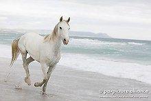 Pferd am Strand - Horses on the beach
