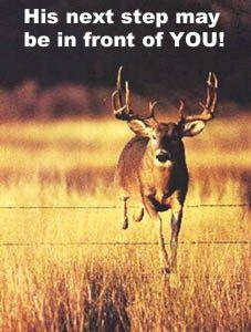 The Hornet Deer Whistle – Electronic Deer Avoidance System #deer #whistle, #deerwhistle, #deer #whistles, #deer #accident, #deer #collision, #deer, #deer #avoidance, #whistle, #automobile #collision, #the #hornet, #hornet, #xp3 #corp, #xp3, #animal #collision, #vehicle #collision, #auto #accident, #deer #whistle, #car, #truck, #motorcycle, #rv, #atv, #electronic #deer #avoidance, #deer #avoidance #system, #deer #alert, #auto #safety, #automobile, #collision, #animal, #sonic #wave, #car…