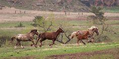 Black Hills Wild Horse Sanctuary Home