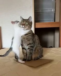 When you are not ready for the responsibility thrown at you - 9GAG Funny Cute Cats, Cute Baby Cats, Cute Cat Gif, Cute Little Animals, Cute Cats And Kittens, Cute Funny Animals, Kittens Cutest, Cute Cat Video, Fat Cats Funny