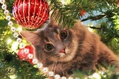 Exclusively Cats Veterinary Hospital Blog: Warm Holiday Wishes from ECVH to you!