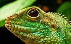 kartinki24_ru_animals_lizards_0008.jpg (1920×1200)