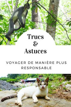 Trucs & astuces pour voyager de manière plus responsable et écologique. #voyage #voyager #voyageur #responsable #voyageresponsable #ecologie #ecologique #trucs #nature #environnement Business Trip Packing, Packing Tips For Travel, Business Travel, Budget Travel, Packing Hacks, Pakse, Phnom Penh, Voyager Malin, Angkor