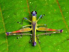 17 Insekten die eher süß als eklig sind! - Buzz des Tages 27.08.2014 | Funcloud
