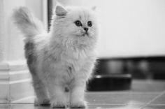 pretty little kitty