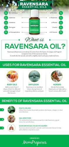 Ravensara oil smells like a sweet-spicy medicinal scent mixed with deep woods. All of its uses and benefits are covered in this reference guide. Essential Oils For Stress, Essential Oil Uses, Young Living Essential Oils, Natural Living, Eos Products, Ravintsara, Esential Oils, Yl Oils, Nail Polish