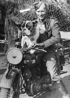 The Biker English Bulldog | The 26 Most Badass Animals From World War II