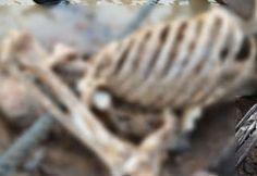 R12 Noticias : Homem é devorado por peixes no rio madeira em Port...
