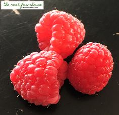 The 3 biggest factors in how big and juicy your raspberries get. Plus what things you don't need to worry about cuz they don't make any difference.