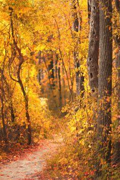 Autumn & Halloween  | Falls For Autumn
