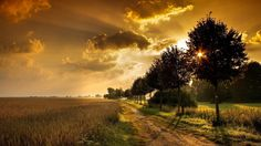 http://hdw.datawallpaper.com/nature/sunset-through-trees-by-wheat-fields-311672.jpg