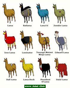 Lamas, welches gefällt dir am Besten?