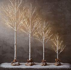 White birch tree w/ burlap! Wow..