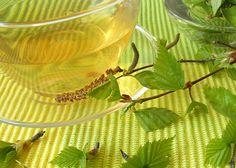 Sinu ilu ja tervise heaks: just praegu on aeg korjata kaselehti - Alkeemia In China, Healing Herbs, Korn, Plant Leaves, Tea, Health, Plants, Fitness, Google