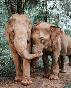 elephants #happy