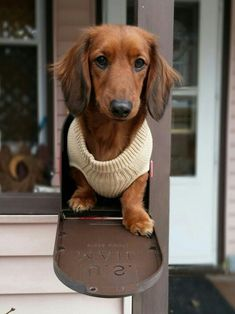 """dachshund mailbox From your friends at phoenix dog in home dog training""""k9katelynn"""" see more about Scottsdale dog training at k9katelynn.com! Pinterest with over 19,500 followers! Google plus with over 128,000 views! You tube with over 400 videos and 50,000 views!! Serving the valley for 11 plus years"""