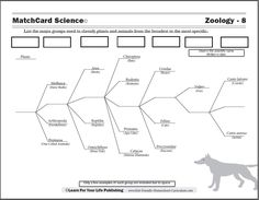 Worksheet Biological Classification Worksheet other animals and science on pinterest the free scientific classification worksheet from matchcard will teach your kids in to grade system using their best friend the