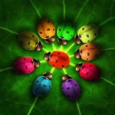 Colorful ladybugs.