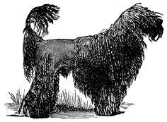 The Old Design Shop: French black poodle
