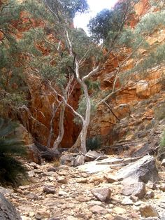 Standley Chasm, Central Australia [rps]