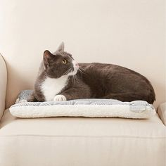 Buy Frisco Reversible Square Cat Pad, Gray Basket Weave Print at Chewy.com. FREE shipping and the BEST customer service! Cat Bros, Good Customer Service, Dog Bed, Basket Weaving, Herringbone, Kitten, Navy, Dogs, Animals