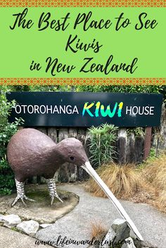 The Best Place to See Kiwis in New Zealand? The Kiwi House in Otorohanga! Fun things to do in New Zealand! #NewZealand #TravelBlog #ThingsToDo