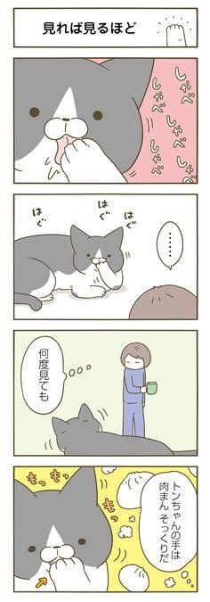 【期間限定!毎日連載】「うちの猫がまた変なことしてる。」第12話