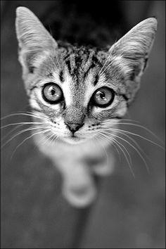 kitty by Amorphis212 on deviantART. ° #blanc #noir