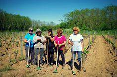 Tirez les cavaillons !!! Team of Chantegrive vine workers